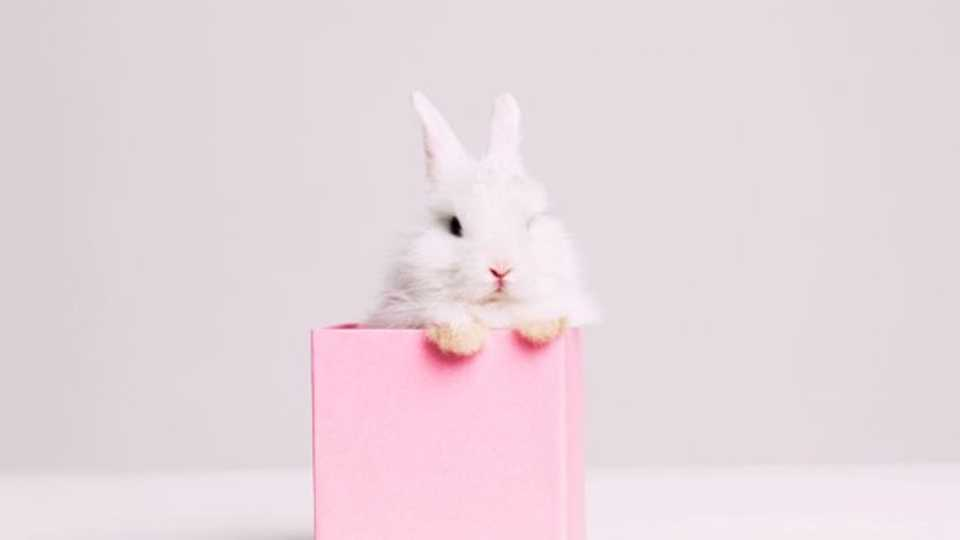 A Guide To The Beauty Brands That Do Not Test On Animals Grazia