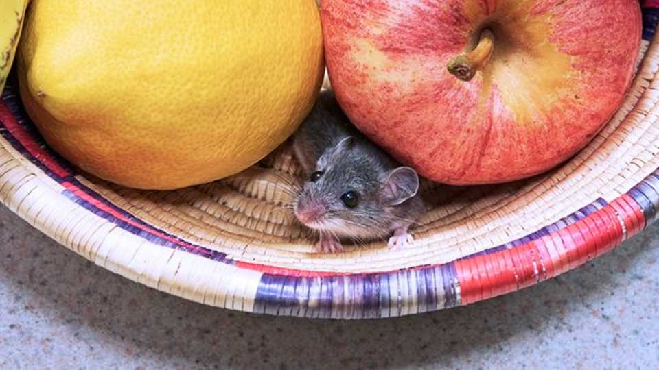 How To Get Rid Of Mice In Your Shit Student House | Grazia