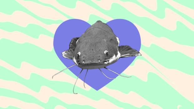 catfish the mean in does dating What term