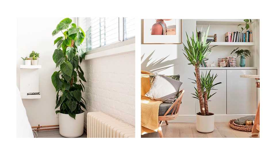 Here's Where To Buy Cool Houseplants Online   Grazia on attractions near me, beauty salon near me, fishing near me, swimming pool near me, gardens near me, factories near me, sauna near me, beach near me, malls near me, lounges near me,